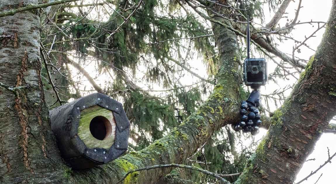 Wildkamera zum Beobachten einer Steinkauzröhre