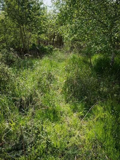 Wildpfad im Gras
