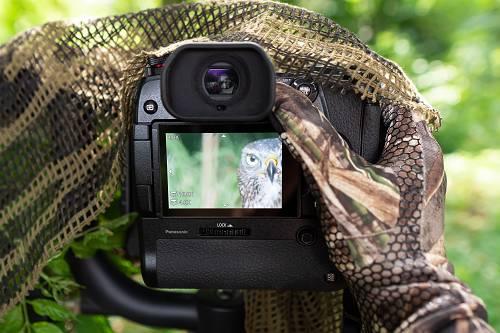 Wildtierfotograf kontrolliert die Schärfe des geschossenen Fotos des jungen Habichts