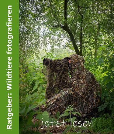 Link zum Beitrag Ratgeber Wildtiere fotografieren